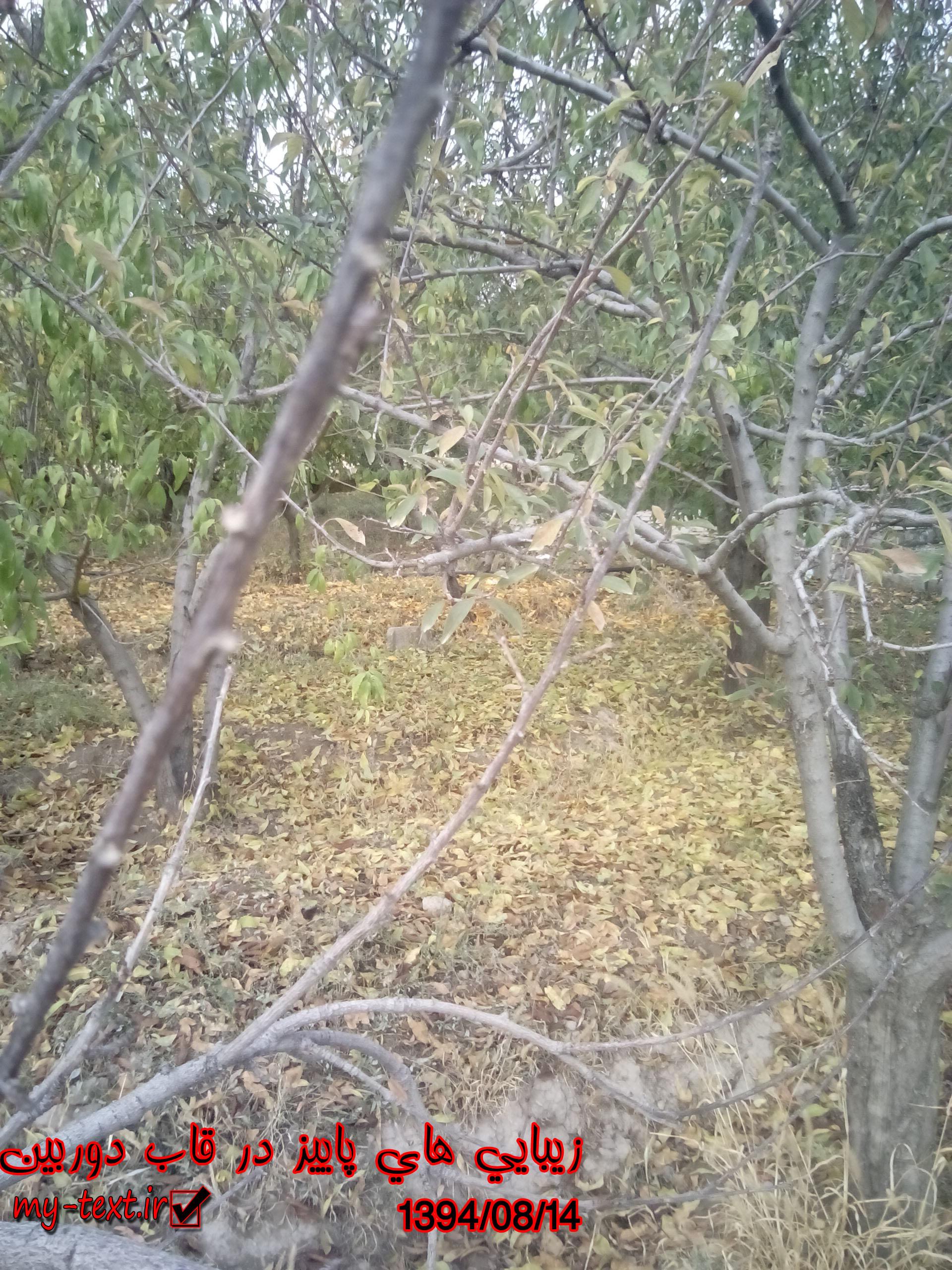 زیبایی پاییز در قاب دوربین (تصاویر اختصاصی و عکاسی شخصی توسط خودم)